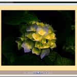 How To Fix Windows Photo Viewer Displaying Yellow Or Orange Tint For White and Transparent Images