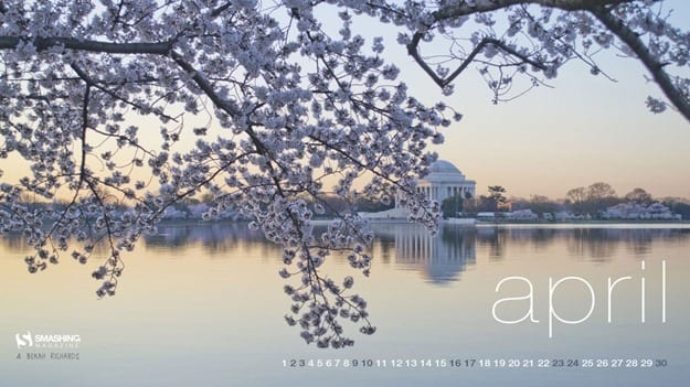 apr-16-cherry-blossoms-full